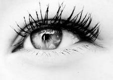 Primer del ojo de B&w Foto de archivo