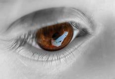 Primer del ojo de Brown Imagen de archivo libre de regalías