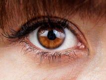 Primer del ojo de la mujer de Brown Fotografía de archivo libre de regalías