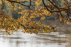 Primer del otoño con las hojas y ramas del roble y río en luz del sol Fotografía de archivo libre de regalías