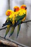 Primer del pájaro del loro foto de archivo