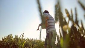 Primer del padre y del hijo que juegan junto en el campo de trigo El padre joven gira a su hijo en manos almacen de video