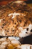 Primer del pan con las pasas y las semillas de girasol imagen de archivo libre de regalías