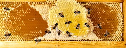 Primer del panal de las abejas de la miel Imagen de archivo