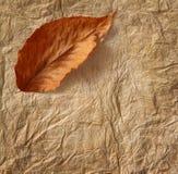 Primer del papel de pergamino viejo con la hoja Imagen de archivo