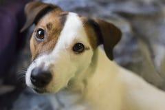 Primer del perro fotografía de archivo libre de regalías