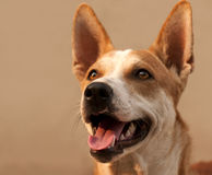 Primer del perro Foto de archivo