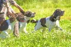 Primer del perro del organismo Imagen de archivo libre de regalías