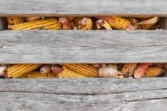 Primer del pesebre del maíz Imagenes de archivo