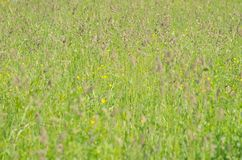 Primer del prado de la primavera Fotografía de archivo