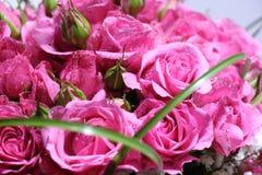 Primer del ramo elegante de rosas rosadas en la floración Imágenes de archivo libres de regalías