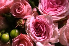 Primer del ramo elegante de rosas rosadas en la floración Foto de archivo libre de regalías