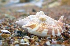 Primer del shell Fotografía de archivo