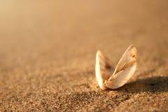 Primer del shell Foto de archivo libre de regalías