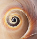 Primer del shell del mar Imagen de archivo libre de regalías