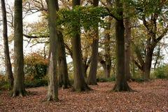 Primer del soto del árbol Foto de archivo libre de regalías