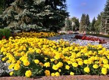 primer del Suave-foco de flores amarillas Imagen de archivo libre de regalías