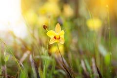 primer del Suave-foco de la planta amarilla de las flores con el bokeh Imagenes de archivo