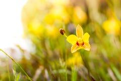 primer del Suave-foco de la planta amarilla de las flores con el bokeh Foto de archivo