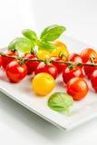 Primer del tomate colorido en la vid Fotos de archivo