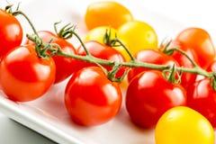 Primer del tomate colorido en la vid Imágenes de archivo libres de regalías