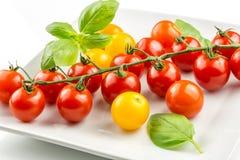 Primer del tomate colorido en la vid Imagen de archivo