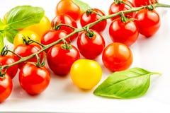 Primer del tomate colorido en la vid Fotografía de archivo