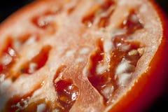 Primer del tomate mohoso Imágenes de archivo libres de regalías