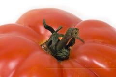Primer del tomate rojo izolated en blanco Fotografía de archivo