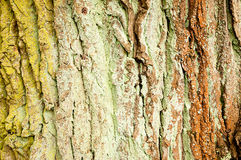 Primer del tronco Foto de archivo
