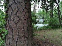 Primer del tronco de árbol foto de archivo