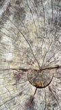 Primer del tronco de árbol Foto de archivo libre de regalías