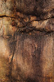 Primer del tronco de árbol aterrorizado como backgroun colorido texturizado fotos de archivo