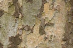 Primer del tronco de árbol plano fotografía de archivo