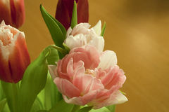 Primer del tulipán de Rose Foto de archivo