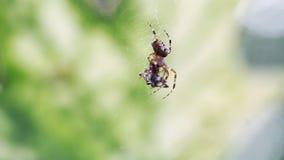 Primer del web de araña en el bosque almacen de video