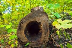 Primer dentro de un árbol caido hueco Imágenes de archivo libres de regalías