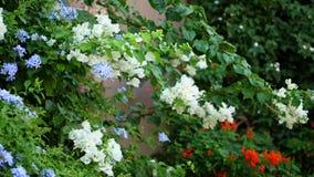 Primer diversos tipos de flores y diferente en el color - blanco, azul, anaranjado contra la perspectiva de jugoso almacen de metraje de vídeo