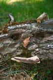 Primer divertido del tronco de árbol Imagen de archivo