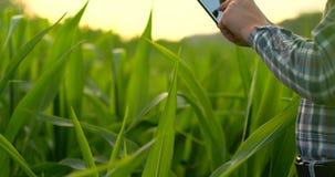 Primer: el agrónomo del ingeniero de las manos con una tableta examina las plantas en los campos en una granja moderna en la pues almacen de video