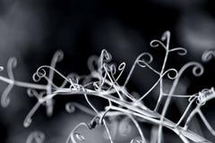 Primer elegante abstracto de la planta de los brotes que sube Fondo decorativo floral blanco negro Profundidad del campo baja Imágenes de archivo libres de regalías