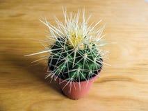Primer en conserva de punta del cactus Foto de archivo