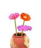 Primer en el florero de la floración de la belleza Foto de archivo libre de regalías