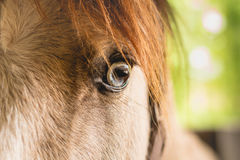 Primer en el ojo de un caballo Imágenes de archivo libres de regalías