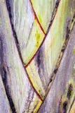Primer en hojas de palma en un jardín tropical Fotos de archivo libres de regalías