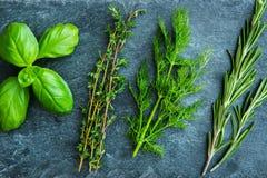 Primer en las hierbas frescas de las especias en el substrato de piedra Imagen de archivo