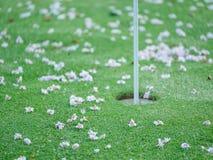 Primer en los flores en putting green Concepto borroso serie imagen de archivo