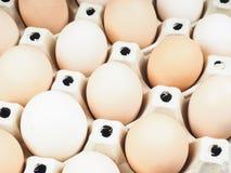 Primer en los huevos marrones y blancos cultivados Foto de archivo libre de regalías