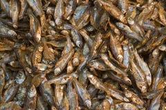 Primer en los pescados secos en un mercado del nepali, Katmandu, Nepal fotografía de archivo libre de regalías