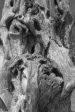 Primer en un árbol muerto Imágenes de archivo libres de regalías
